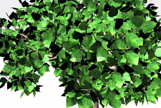 Picture of Catalpa Tree Model FBX Format