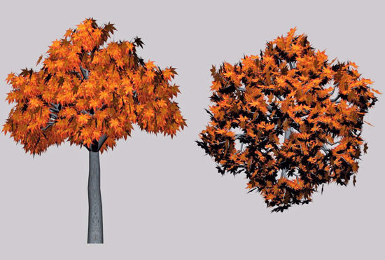 Picture of Fall Maple Tree Model FBX Format
