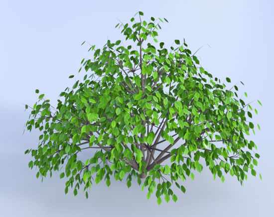 Picture of Ground Cover Plant Model 1 Poser Format