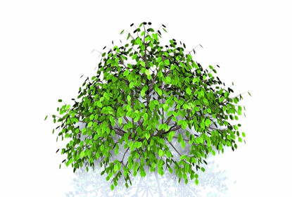 Picture of Ground Cover Plant Model FBX Format