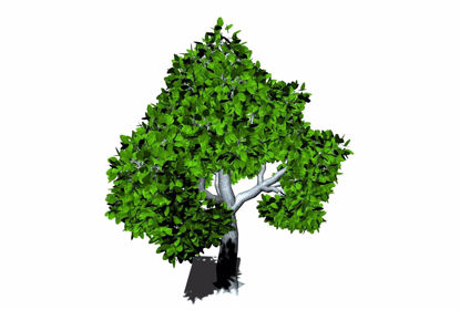 Picture of Huge Shade Tree Model FBX Format