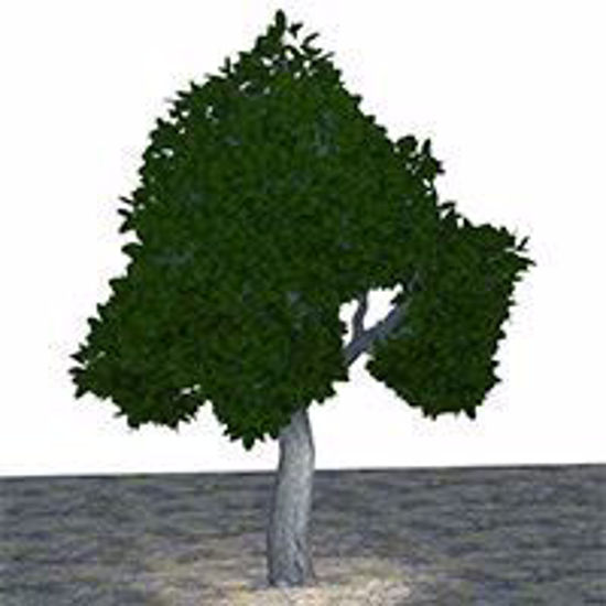 Picture of Large Green Tree Model Poser Format