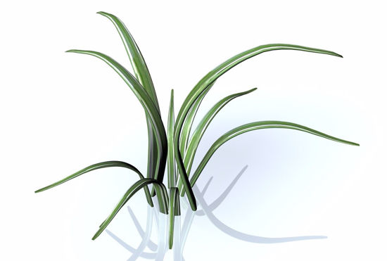 Picture of Monkey Grass Plant Model FBX Format