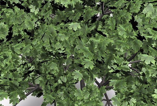 Picture of Norway Maple Tree Model Poser Format