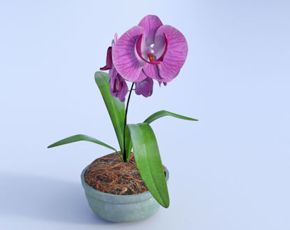 Picture of Orchid Plant Model Poser Format