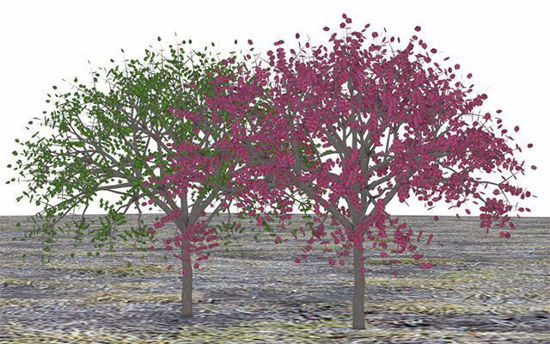 Picture of Red and Green Dogwood Tree Models Poser Format
