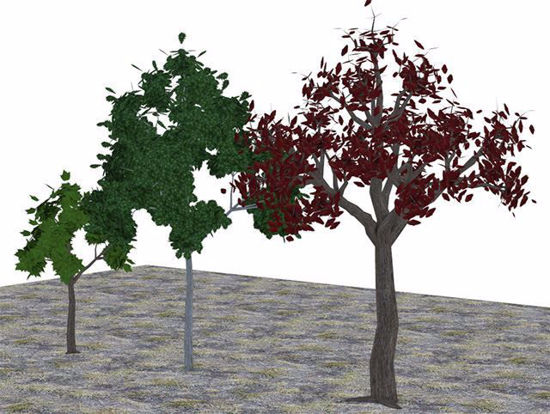 Picture of Three Medium Size Tree Models Poser Format