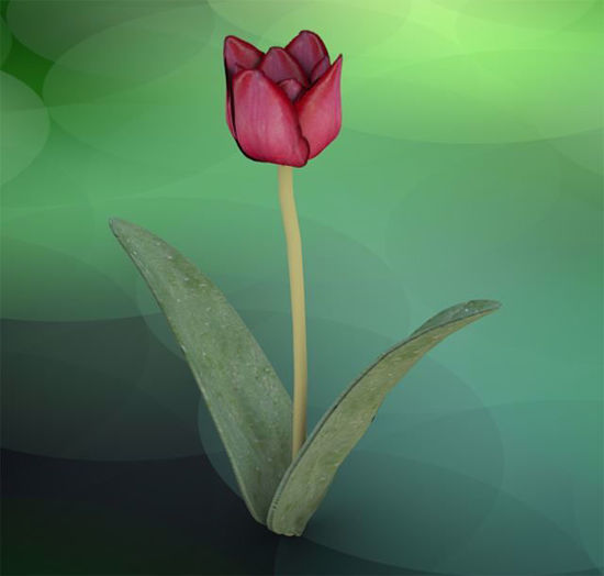 Picture of Tulip Plant Model Poser Format