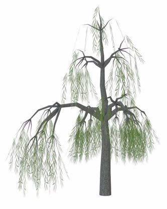 Picture of Weeping Willow Tree Model Poser Format