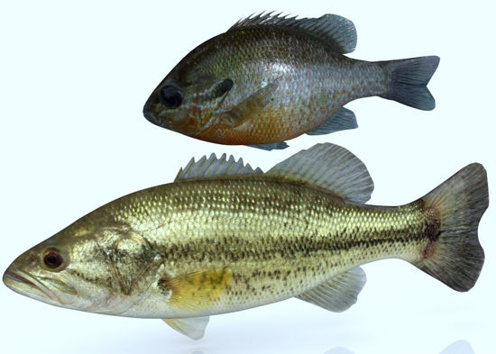 Picture of Large Mouth Bass and Bream Models FBX Format