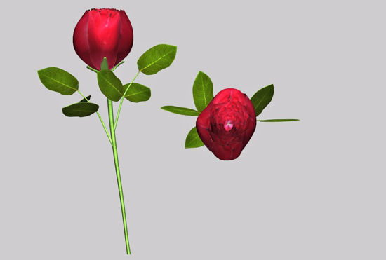 Picture of Long Stem Rose Plant Model FBX Format