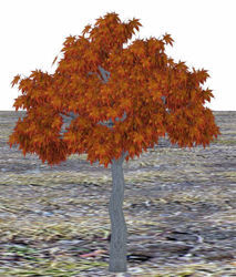 Medium Fall Maple Tree Model Poser Format