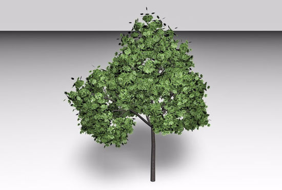 Picture of Norway Maple Tree Model FBX Format