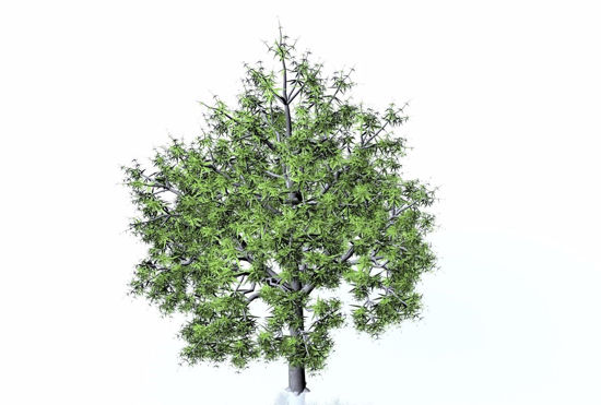 Picture of Water Oak Tree Model FBX Format