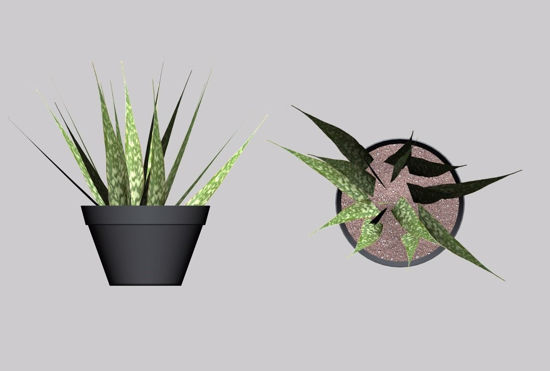 Picture of Mother in Law Tongue Plant Model FBX Format