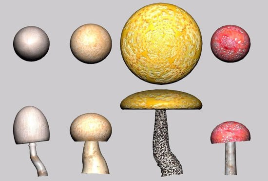Picture of Mushroom Plant Models FBX Format