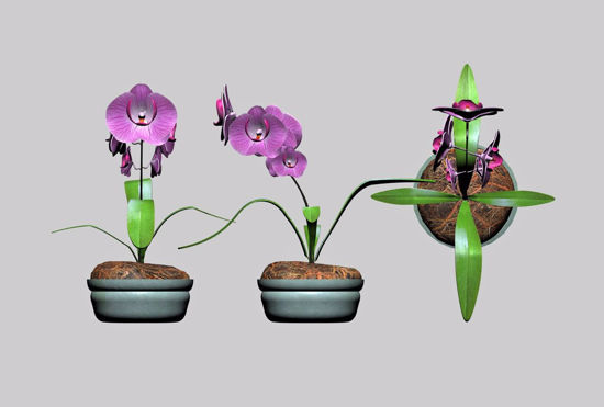 Picture of Orchid Plant Model FBX Format