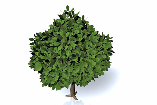 Picture of Ornamental Cherry Tree Model FBX Format