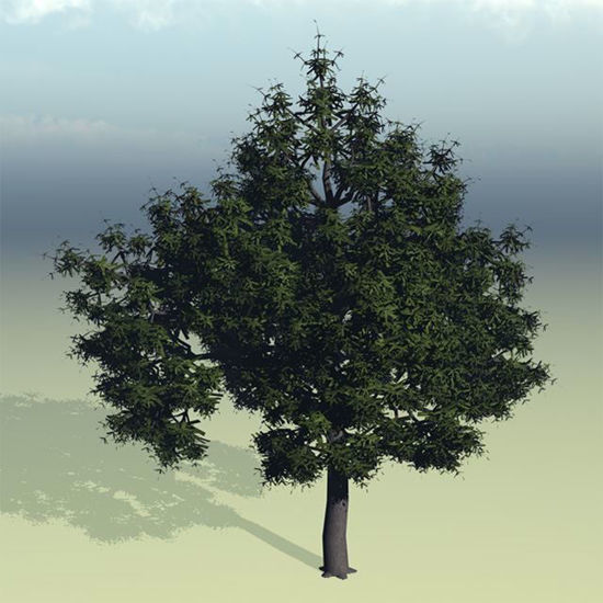 Picture of Water Oak Tree Model Poser Format