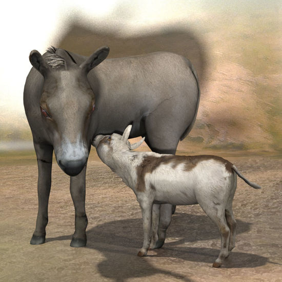 Poserworld Donkey and Donkey Colt figure for Poser