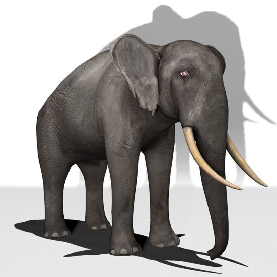 African Elephant for Poser, Firefly render