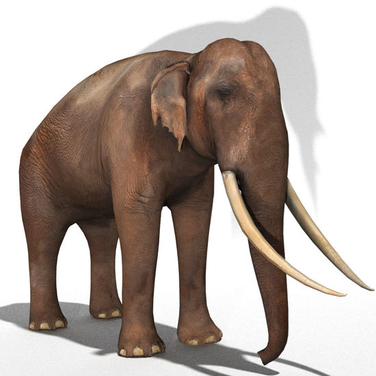 Indian Elephant (Figure for Poser)