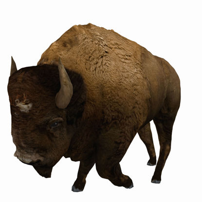 Bison (Buffalo) for Poser by PoserWorld
