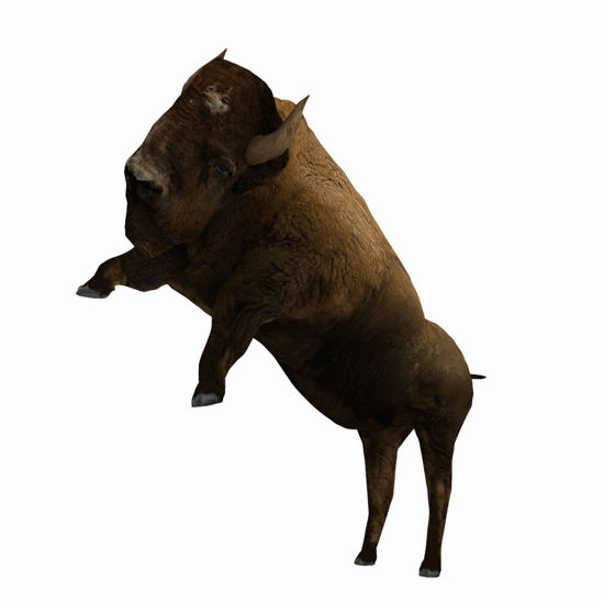 Animated Bison (Buffalo) for Poser by PoserWorld