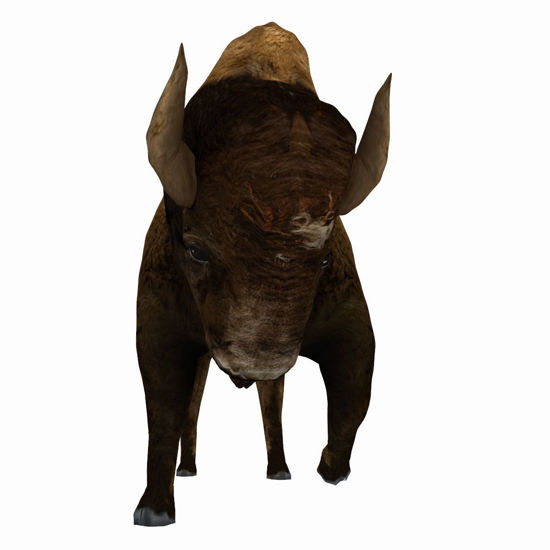 3D Bison figure (Buffalo) for Poser by PoserWorld rendered in SuperFly