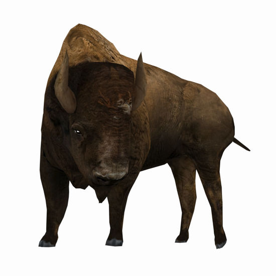3D Bison figure (Buffalo) for Poser by PoserWorld rendered in FireFly