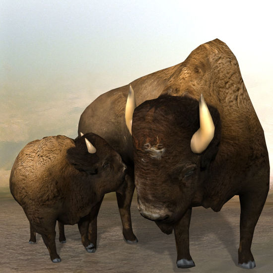 3D Bison figure (Buffalo) nursing  for Poser by PoserWorld rendered in SuperFly