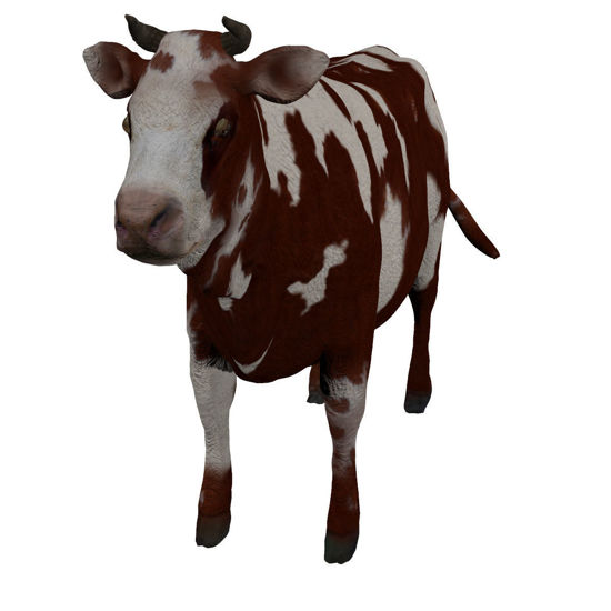 Cattle Multi- Breed (morphing figure & 12 cattle breed set for Poser), rendered in Firefly