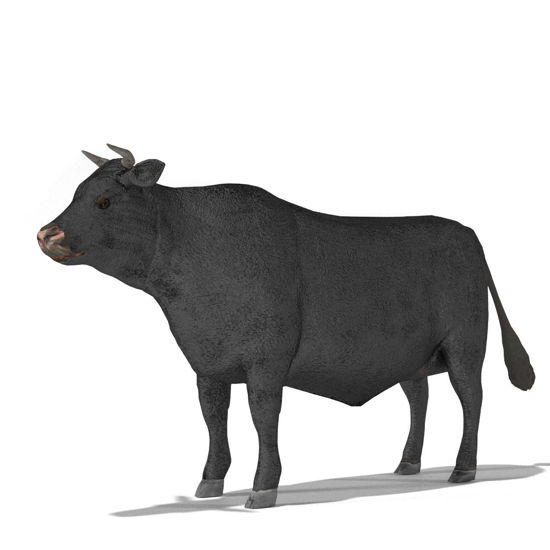 Cattle Multi- Breed (morphing figure & 12 cattle breed set for Poser), Angus Steer rendered in Poser Superfly