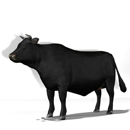 Cattle Multi- Breed (morphing figure & 12 cattle breed set for Poser), Angus Steer rendered in Poser Firefly