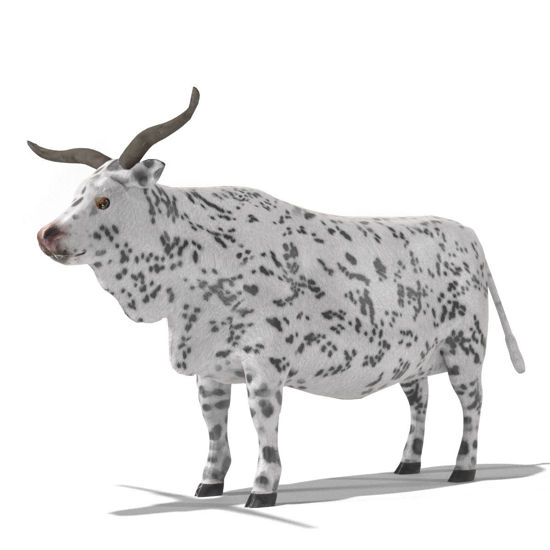 Cattle Multi- Breed (morphing figure & 12 cattle breed set for Poser), Texas Longhorn Steer rendered in Poser Superfly