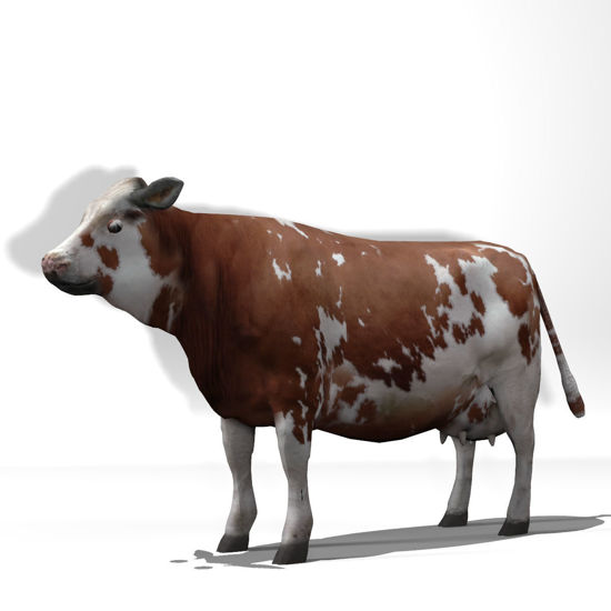 Cattle Multi- Breed (morphing figure & 12 cattle breed set for Poser), Montbeliarde Steer rendered in Poser Firefly