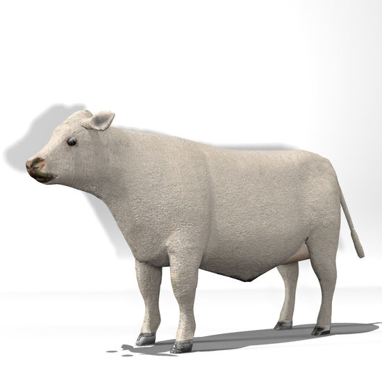 Cattle Multi- Breed (morphing figure & 12 cattle breed set for Poser)Charolais Steer rendered in Poser Firefly