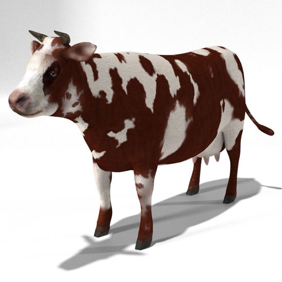 Cattle Multi- Breed (morphing figure & 12 cattle breed set for Poser), Hereford Cow rendered in Poser Superfly