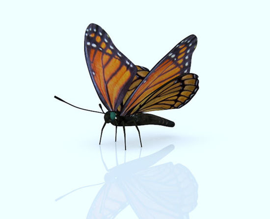 Picture of Viceroy Butterfly Model with Movements