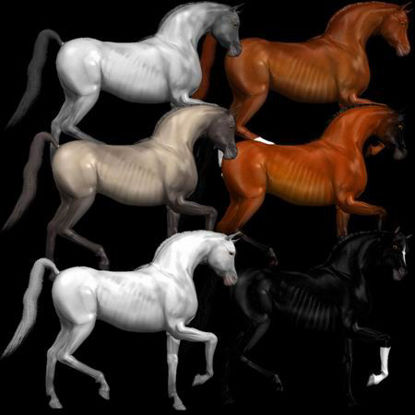 Picture of Arabian horses