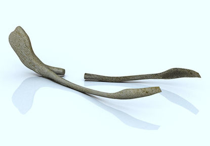 Picture of Breakable Chicken Wishbone Model