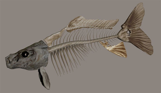 Picture of Dead Fish Skeleton Model