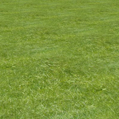 Picture of Seamless Long Green Grass - 1420x1110