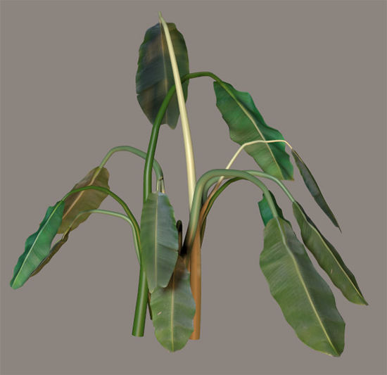 Picture of Banana Tree Plant Model