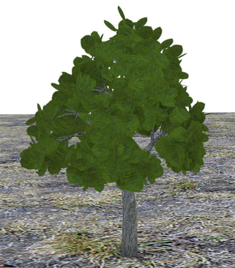 Picture of Landscaping Bush Model