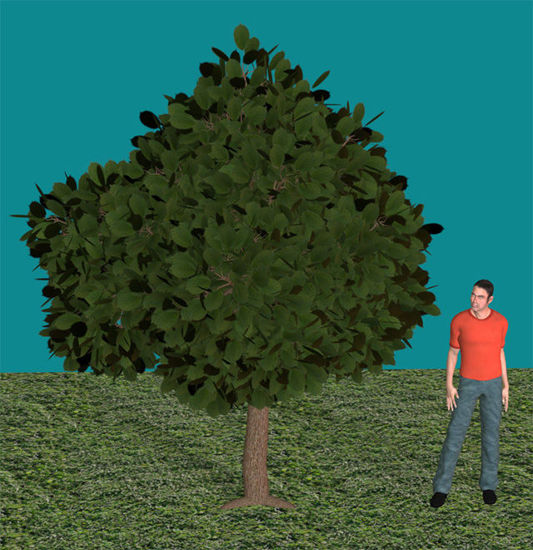 Picture of Ornamental Cherry Tree Model