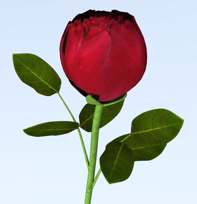 Picture of Long Stem Red Rose Model