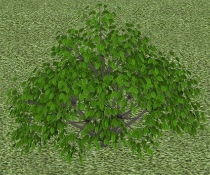 Picture of Ground Cover Plant Model 1 - Poser and DAZ Studio Format