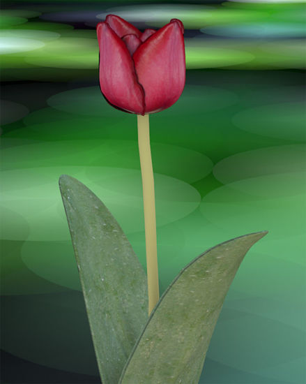 Picture of Tulip Plant Model 2 - Poser and DAZ Studio Format