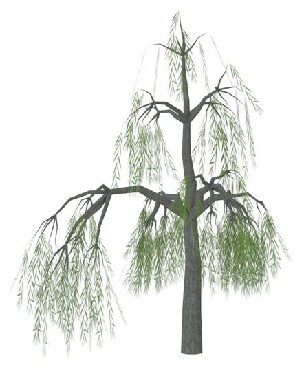 Picture of Weeping Willow Tree Model - Poser and DAZ Studio Format